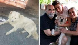 ოჯახი თავის დაკარგულ ძაღლს სხვა ქალაქში შემთხვევით შეხვდა (ემოციური ვიდეო)