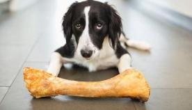 შეიძლება თუ არა, ძაღლს საღრღნელად მისცეთ ძვალი?