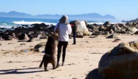 ბაბუინმა ბრიტანელი ტურისტი გაძარცვა (სახალისო ვიდეო)
