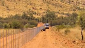 კატებისგან მცირე ზომის ცხოველების დასაცავად ავსტრალიაში ყველაზე გრძელი ღობე აშენდა (+ვიდეო)