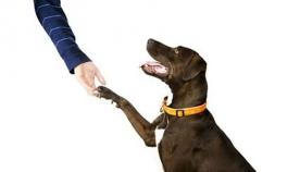 რა უნდა გავაკეთოთ, რომ ძაღლმა დაგვიჯეროს