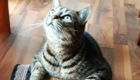 """რატომ უყურებენ კატები """"მოჩვენებებს""""? რას ხედავენ ისინი სინამდვილეში"""