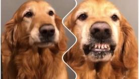 პატრონმა ძაღლს კამერის წინ გაღიმება ასწავლა (სახალისო ვიდეო)