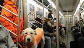 თბილისში ძაღლების საზოგადოებრივი ტრანსპორტით გადაყვანის წესი