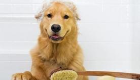 რამდენად სწორად აბანავებთ თქვენს ძაღლს?