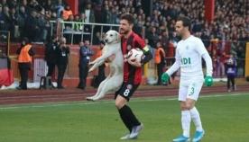 თამაშის მსვლელობისას ძაღლი საფეხბურთო მოედანზე შევარდა და ფეხბურთელს ბურთი წაართვა (სახალისო ვიდეო)