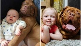 პატარა გოგონასა და უზარმაზარი ძაღლის საოცარი მეგობრობის ისტორია