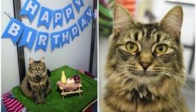 თავშესაფარში მცხოვრებმა კატამ მოიწყინა მას შემდეგ, რაც მის დაბადების დღეზე არავინ მივიდა