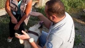 ერთგულება ერთგულებისთვის! - მუნიციპალური თავშესაფრის ერთგული ძაღლი, სახელად ტასო, ბედნიერად გაჩუქდა (+ფოტო)