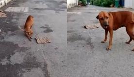 """""""თათმოტეხილი"""" ძაღლი საკვებს ითხოვს... რა ხდება სინამდვილეში (სახალისო ვიდეო)"""