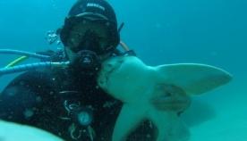 ყოველი ჩაყვინთვისას მყვინთავს ერთი და იგივე ზვიგენი უახლოვდება მხოლოდ იმიტომ, რომ ჩაეხუტოს