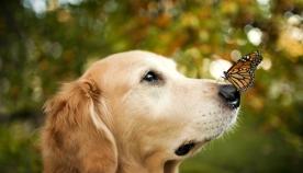 ძაღლების შეგრძნებები და ქცევები