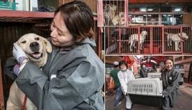 სასაკლაოდან გადარჩენილები: სამხრეთ კორეაში ყველაზე დიდი ძაღლის ხორცის ბაზარი დახურეს