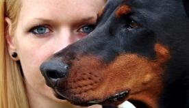 სარგებლის მიღების მიზნით, ძაღლს ადამიანზე მანიპულირება შეუძლია