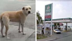 დაუძლურებული, გამხდარი ძაღლი ავტოგასამართ სადგურზე მივიდა... თანამშრომლებმა შეიფარეს, ხოლო 2 წლის შემდეგ, ცხოველმა მათ სამაგიერო გადაუხადა