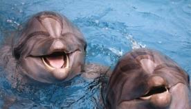პირველი ქვეყანა, სადაც დელფინარიუმები აკრძალეს