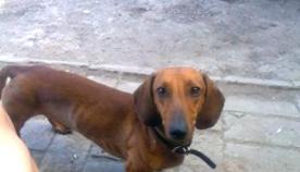 დაკარგული ძაღლები - ანუ, როგორ გავუფრთხილდეთ ჩვენს ბინადრებს