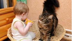 პედიატრების მიერ უარყოფილი იქნა აზრი, რომ კატის სახლში ყოლა შესაძლოა ბავშვებში ასთმის მიზეზი გახდეს