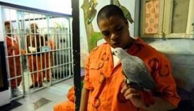ციხე, სადაც თუთიყუშებს უვლიან