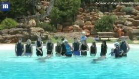 დელფინები მამაკაცს გოგონასთვის ხელის თხოვნაში დაეხმარნენ (+ვიდეო)