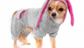 ტანსაცმელმა ძაღლს შესაძლოა, ჯანმრთელობის პრობლემები შეუქმნას