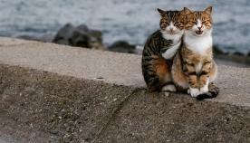 """ფოტომ, სადაც უპატრონო """"შეყვარებული კატები"""" პოზირებენ, სოციალური ქსელი დაიპყრო"""