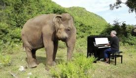 უსინათლო სპილოს საოცარი რეაქცია პიანინოს ხმაზე (ემოციური ვიდეო)