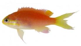თევზის ახალ ჯიშს სახელი ოფიციალურად ბარაკ ობამას საპატივცემულოდ დაარქვეს