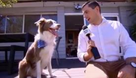 """ინსტაგრამის ყველაზე პოპულარულმა ძაღლმა ჟურნალისტის კითხვას """"იუმორით"""" უპასუხა (სახალისო ვიდეო)"""