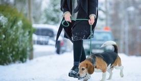 7 რჩევა, თუ როგორ ვიზრუნოთ ძაღლზე ზამთარში