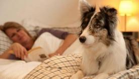 როგორ გადავაჩვიოთ ძაღლი ჩვენს საწოლში ძილს?
