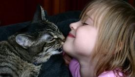 რა შემთხვევაში ლოკავს კატა პატრონს?