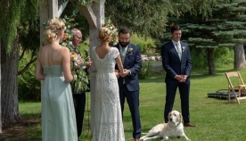 ლაბრადორი ბუნი საქორწილო წვეულების ვარსკვლავი გახდა! მან პოპულარობა ერთადერთი კადრით მოიპოვა და აი, ისიც...