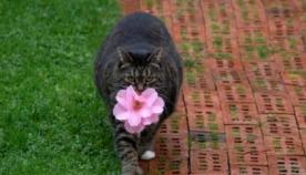 მსუქანმა კატამ მოიფიქრა ხერხი, თუ როგორ გაეხარებინა პატრონი და სახელი გაითქვა…