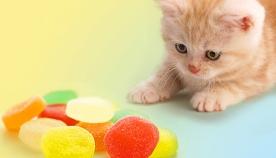 მავნებელია თუ არა შაქარი კატებისთვის?!