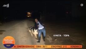 უზარმაზარი ღორი პირდაპირ ეთერში ჟურნალისტს თავს დაესხა (სახალისო ვიდეო)