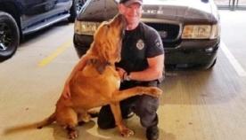 ძაღლი, რომელიც პოლიციაში რამდენიმე წელი მსახურობდა, ავადმყოფობის შემდეგ სრულიად მარტო დარჩა