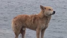 წვიმასა და ქარში ძაღლი კლდოვან ნაპირს არ შორდებოდა... ერთ დღეს ადგილობრივებმა ამის მიზეზი გაიგეს (ემოციური ვიდეო)