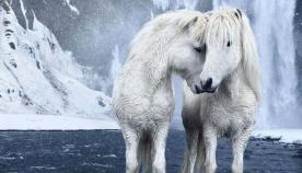 ცხენების ზღაპრული ფოტოები, რომლებიც ისლანდიაში ექსტრემალურ პირობებში ცხოვრობენ