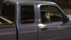 ეს ძაღლი მანქანაში მშვიდად იჯდა, მაგრამ მოხდა ის, რამაც ფანჯრიდან გადმოხტომა აიძულა (ემოციური ვიდეო)