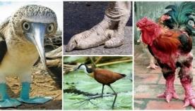 ფრინველები უცნაური ფეხებით (13 ფოტო)