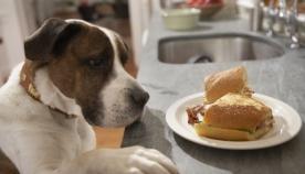 თუ ძაღლი საკვებს იპარავს