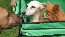 ძაღლის სუნი