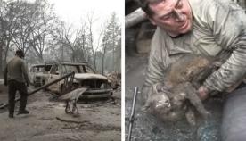 მამაკაცმა დამწვარი სატვირთოს ძრავიდან კატა გამოიყვანა, ცხოველის დანახვისას ის ცრემლებს ვერ იკავებდა (ემოციური ვიდეო)