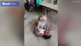 მაიმუნი შეიჭრა სახლში, მშობლებს ჩვილი წაართვა და თვითმხილველებს ბავშვის სიახლოვეს არ უშვებდა (+ვიდეო)