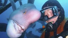 მყვინთავი 25 წელია, საუკეთესო მეგობარს აკითხავს, თუმცა, ის საშინელი შესახედაობის თევზია (+ვიდეო)