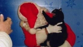 როგორც ჩანს, ამ ცხოველებს დღესასწაულზე სხვა გეგმები ჰქონდათ... (14 სახალისო ფოტო)