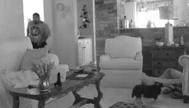 პატარა ჩიხუახუამ ქურდი სახლიდან გააგდო, ფაქტი ფარულმა ვიდეო კამერამ დააფიქსირა (+ვიდეო)