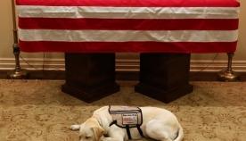 ფოტომ, სადაც ჯორჯ ბუშის ძაღლი პატრონის სასთუმალს არ შორდება, მილიონობით ადამიანის თანაგრძნობა გამოიწვია