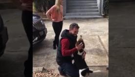 ძაღლს პატრონი 18 თვე არ უნახავს, შეხვედრისას ცხოველის რეაქცია საოცარია (ემოციური ვიდეო)